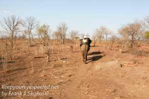 zimbabwe-elephant-ride-15