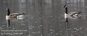 PPL Wetlands birds -10