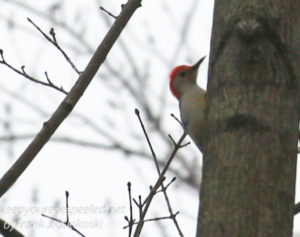 PPL Wetlands birds -21