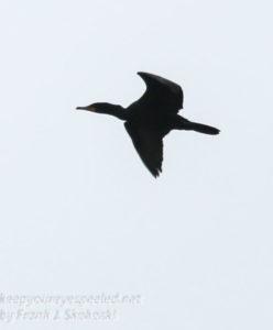 PPL Wetlands birds -9