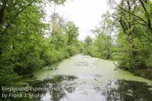 wetlands -13