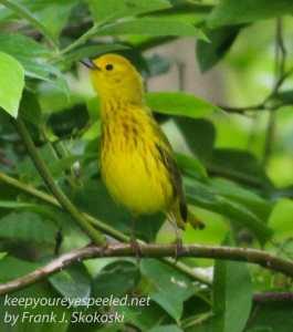 wetlands birds-20