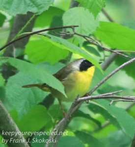 wetlands birds-27