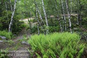 pitch pine barrens -22