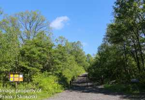 Wooded access trail to Black diamond trail