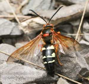 wasp on ground