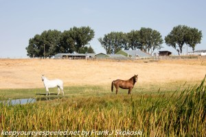 Horses on ranch Idaho
