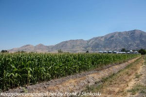 cornfields and mountains in Utah