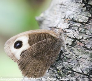 moth or butterfly on tree