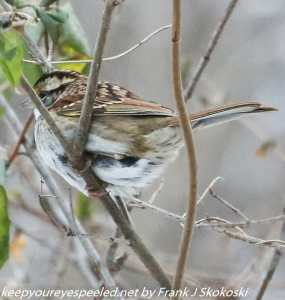 sparrow in branches