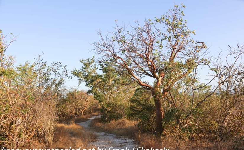 Puerto Rico Day Four:  An Unplanned Hike Into The Guanica Dry Forest