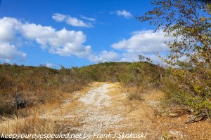 trail to dry forest