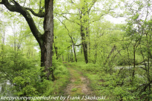 lush green trees on trail