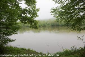 green trees along Susquehanna River