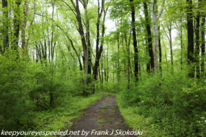 lush green trees along trail