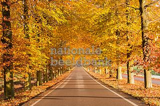nationalebeeldbank_2014-11-891501-2_laan-met-bomen-in-de-herfst