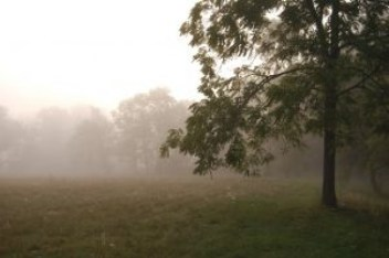 zonsopkomst-bomen_2857545