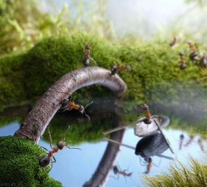 Η υπέροχη ζωή των μυρμηγκιών