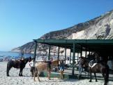 Βόλτα με τα άλογα στην παραλία του Μύρτου