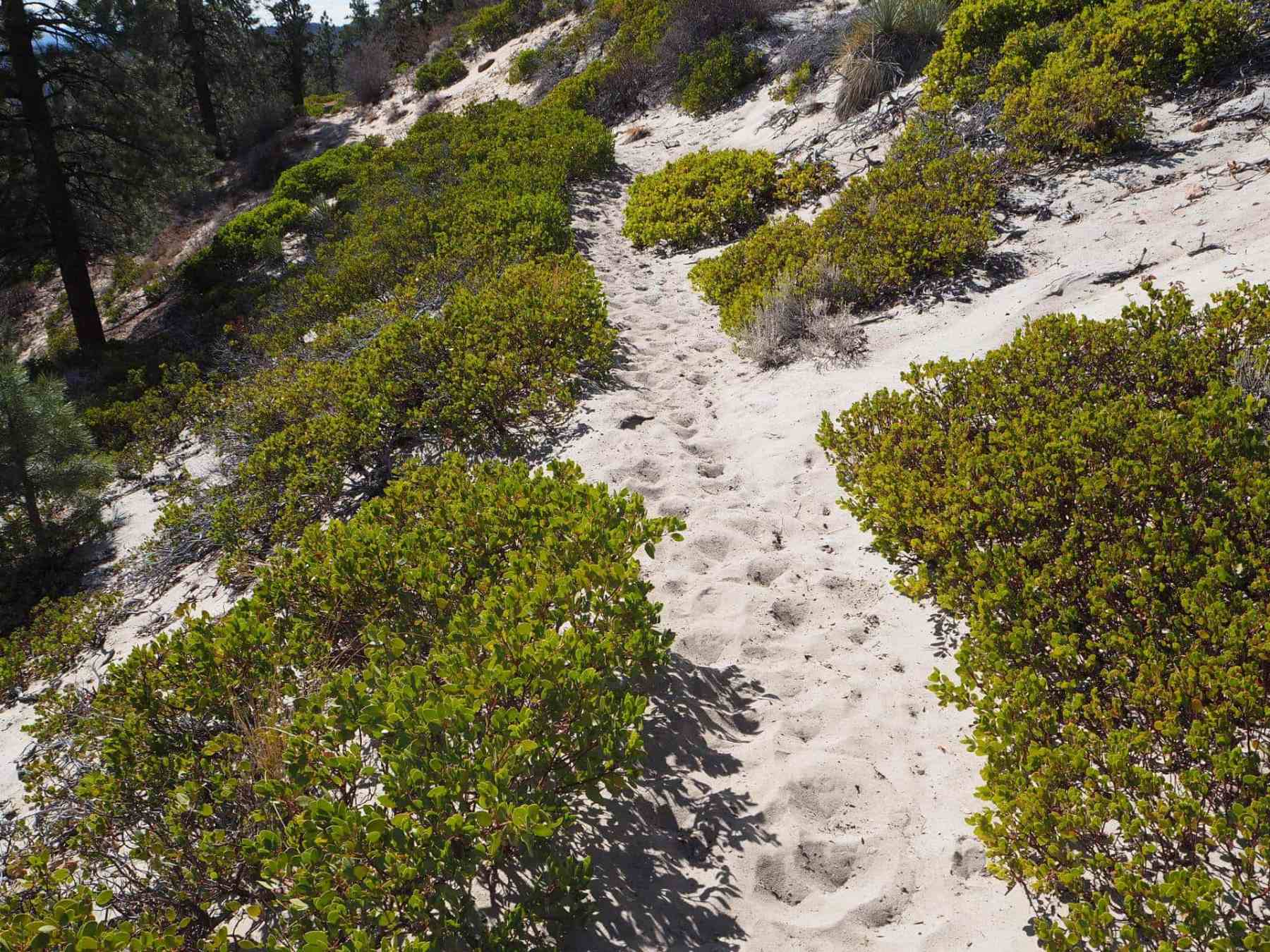 varied terrain along Riggs Spring Loop Trail