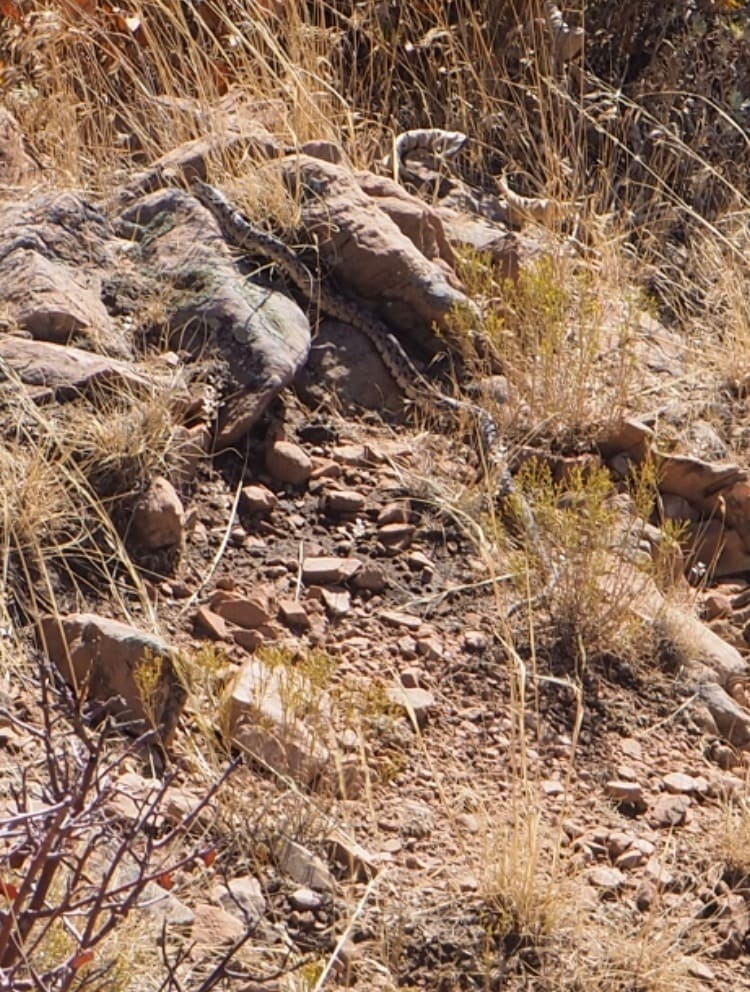 The only snake I've taken a picture of in Utah.