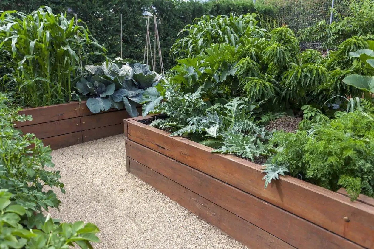 What Soil Buy Vegetable Garden