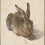 Durer Young Hare