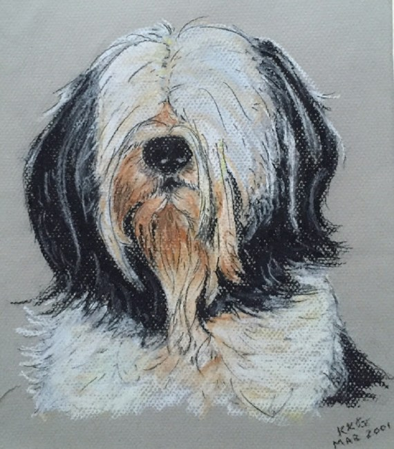 Maltese terrier pet portrait - chalk pastels - Kelly Goss