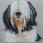 Maltese terrier pet portrait - chalk pastels - Kelly Goss