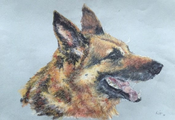 German Shepherd Dog pet portrait - oil pastel - Kelly Goss