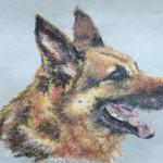 German Shepherd Dog pet portrait - oil pastel - Kelly Goss