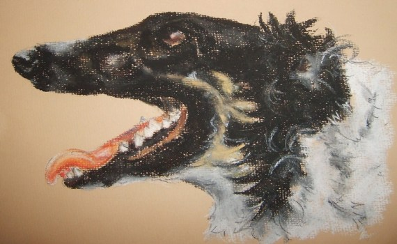 Borzoi pet portrait - chalk pastels - Kelly Goss