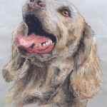 Weimaraner pet portrait - chalk pastels - Kelly Goss