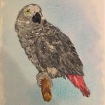 Pet portrait of an African Grey parrot - Kelly Goss