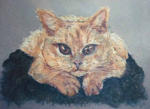 Pet portrait of a British short hair cat - Kelly Goss