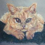 Pet portrait of a British short hair cat - Kelly Goss