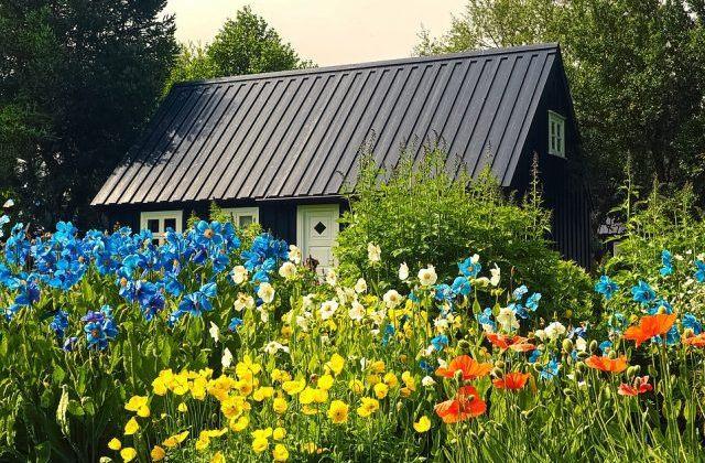 Creating A Beautiful Garden On A Budget