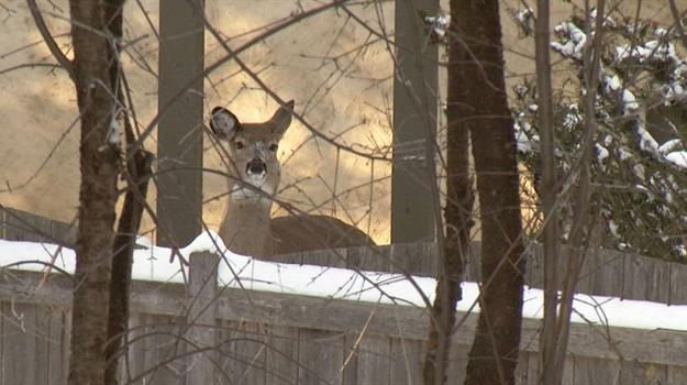 deer-sioux-falls-city-limits-thinning-to-start_444295530621