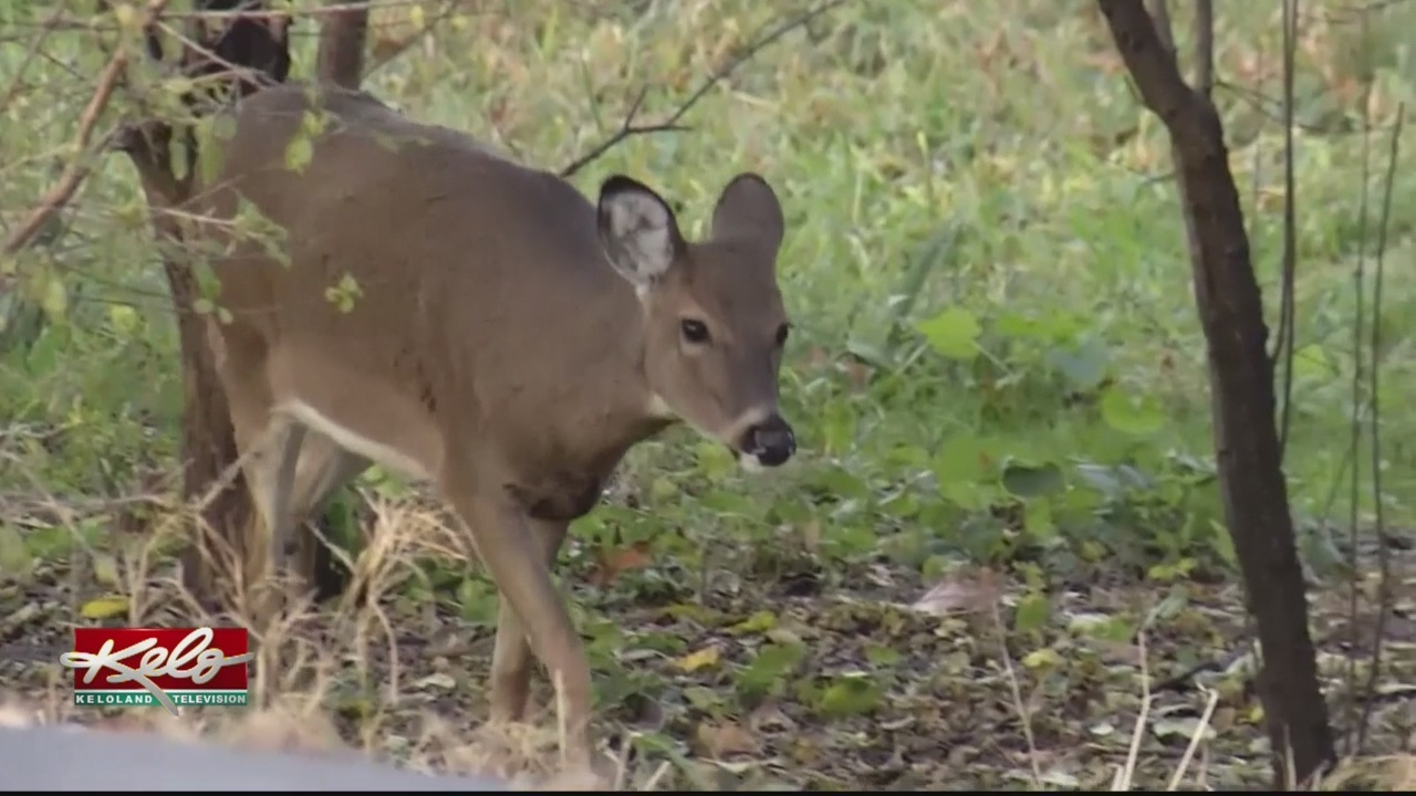 Changes Proposed For Deer Hunting Licenses