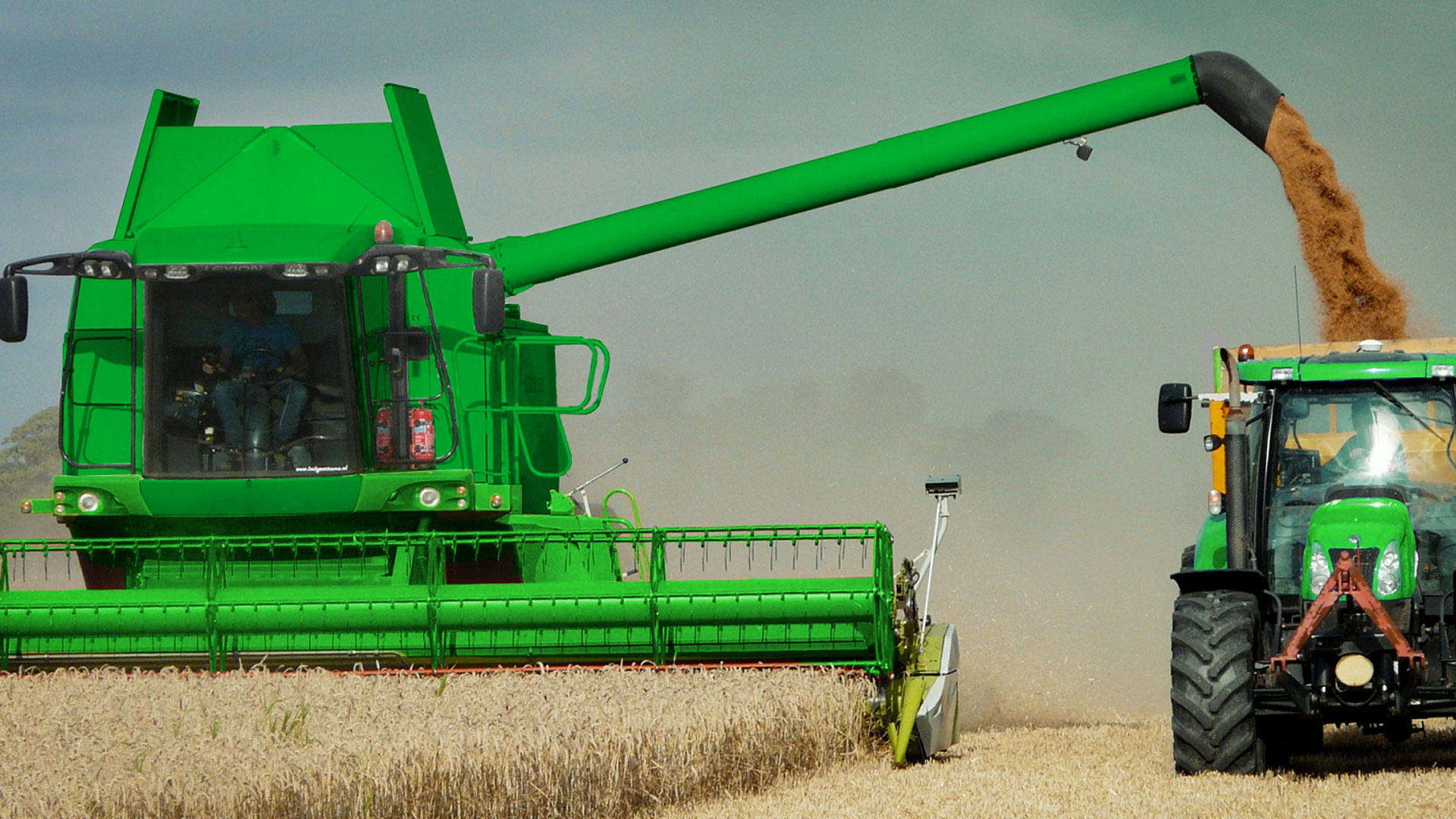 KELO Wheat