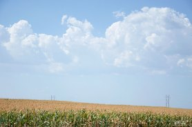corn-kansas-skies-crop