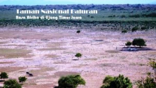 Taman Nasional Baluran, Rasa Afrika di Ujung Timur Jawa