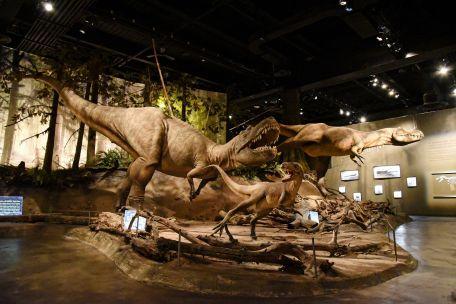 加拿大亞伯達-尋找恐龍之旅 (26)