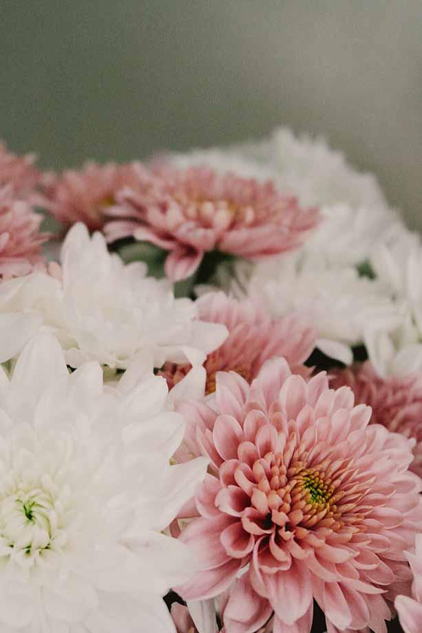 dalia fiore-festa-della-mamma