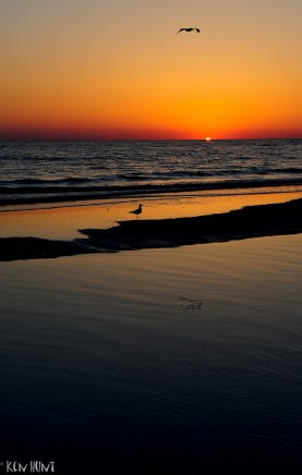 Beach Birds at Sunset