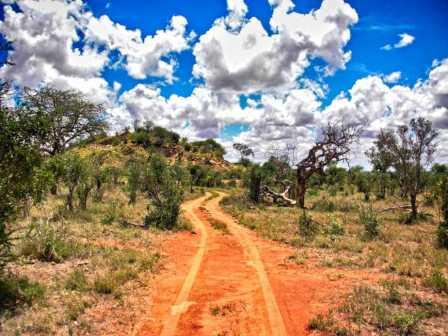 Serengeti Kenia