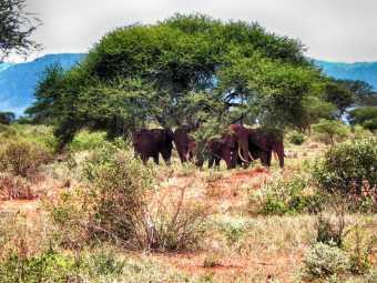 kenia-afrika-reise-bilder-091