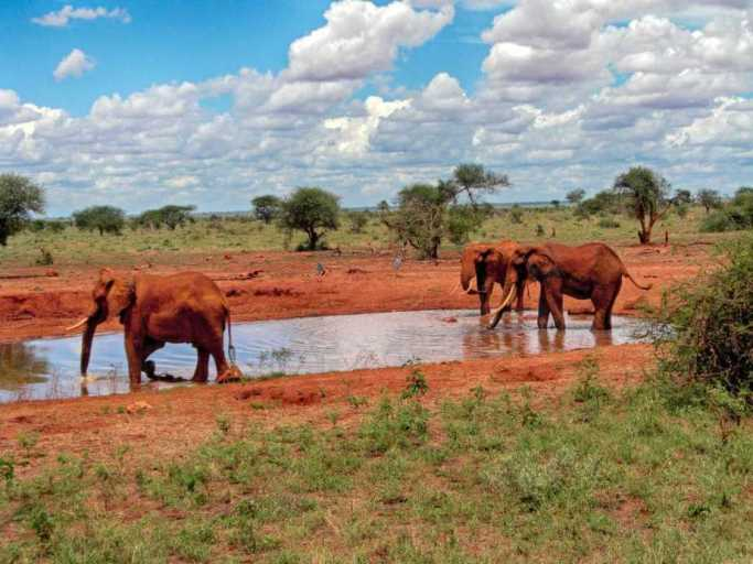 kenia-afrika-reise-bilder-112