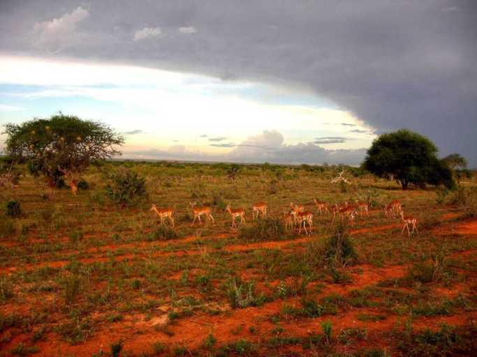 kenia-afrika-reise-bilder-168