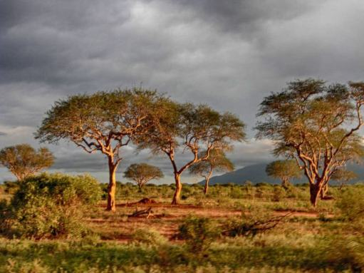 kenia-afrika-reise-bilder-188